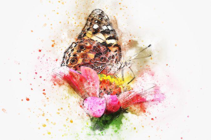 butterfly-2737258_1920