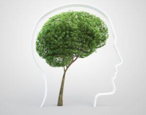 Ментальная экология